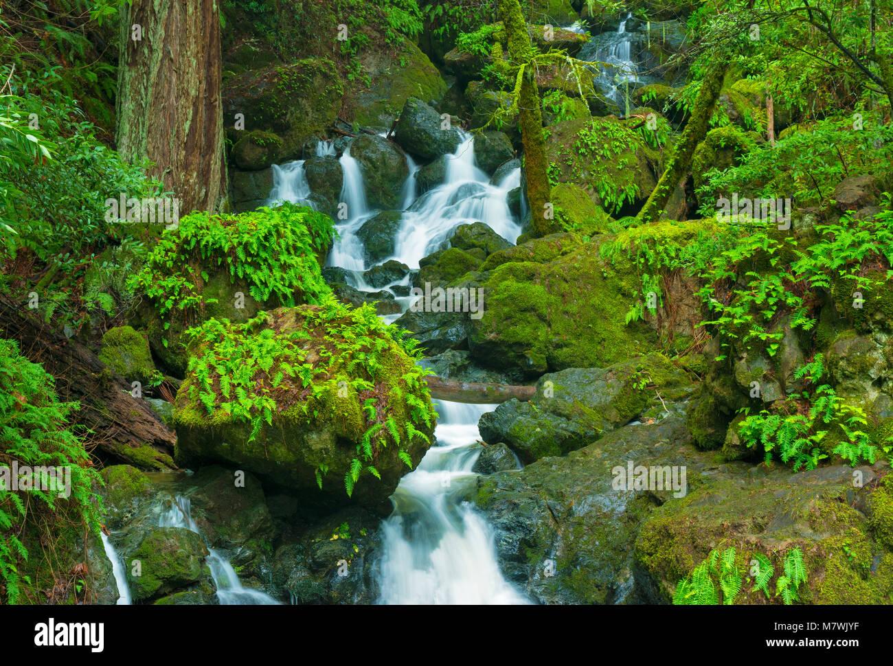 Katarakt fällt, Cataract Canyon, Mount Tamalpais, Marin County, Kalifornien Stockbild