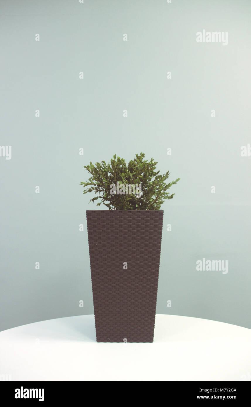 Indoor Pflanze Foto in gedeckten Farbpalette, symmetrisch auf der Vorderseite, Pfosten für Design Magazin Aussehen Stockbild