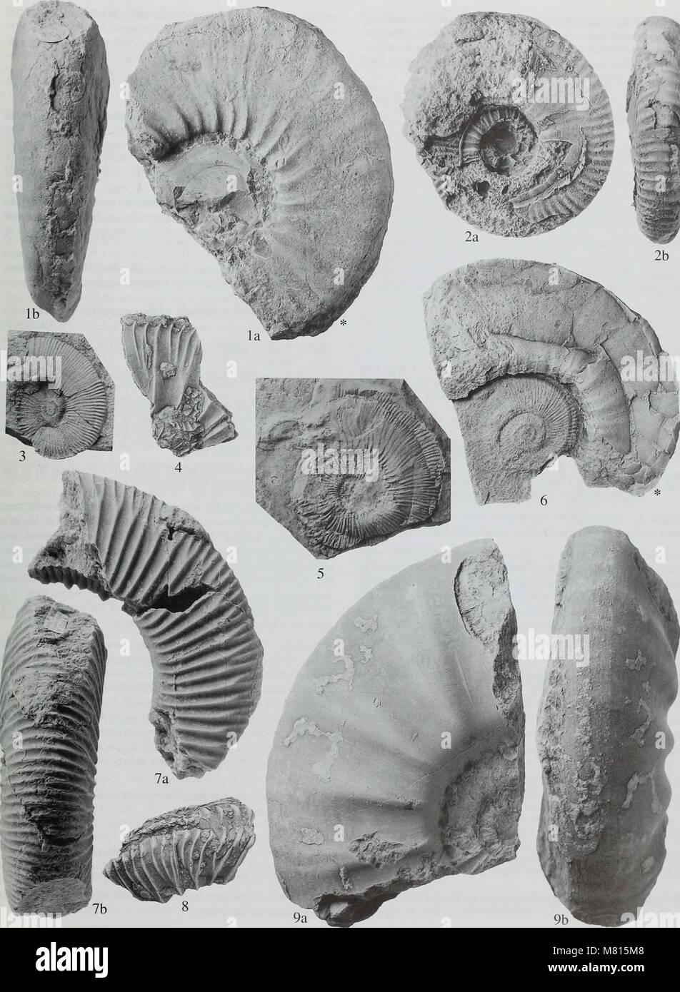 Bulletin der natürlichen Histort Museum. Geologie der Serie (1998) (19873332013) Stockfoto