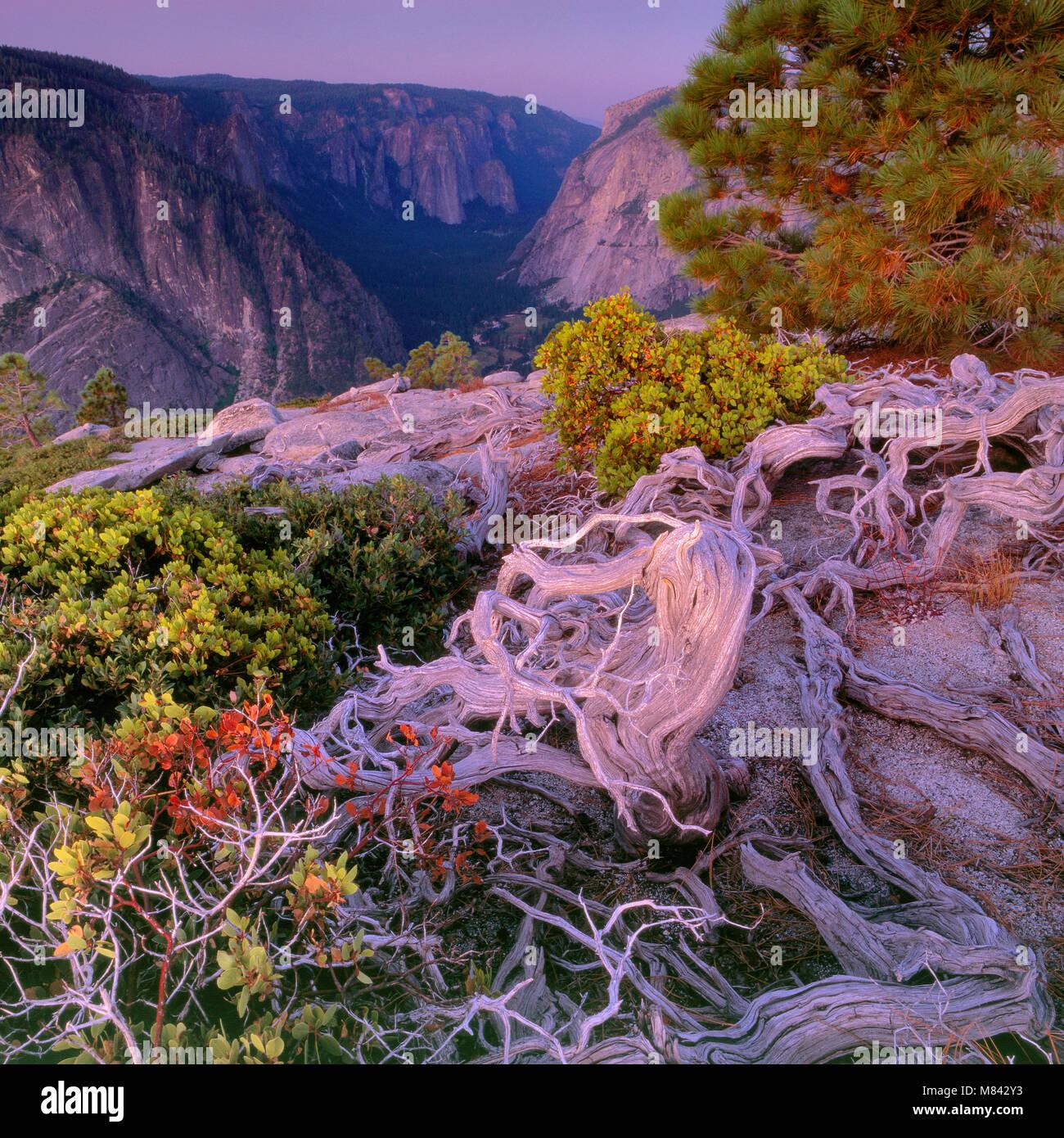 Dämmerung über Yosemite Valley, Yosemite National Park, Kalifornien Stockbild
