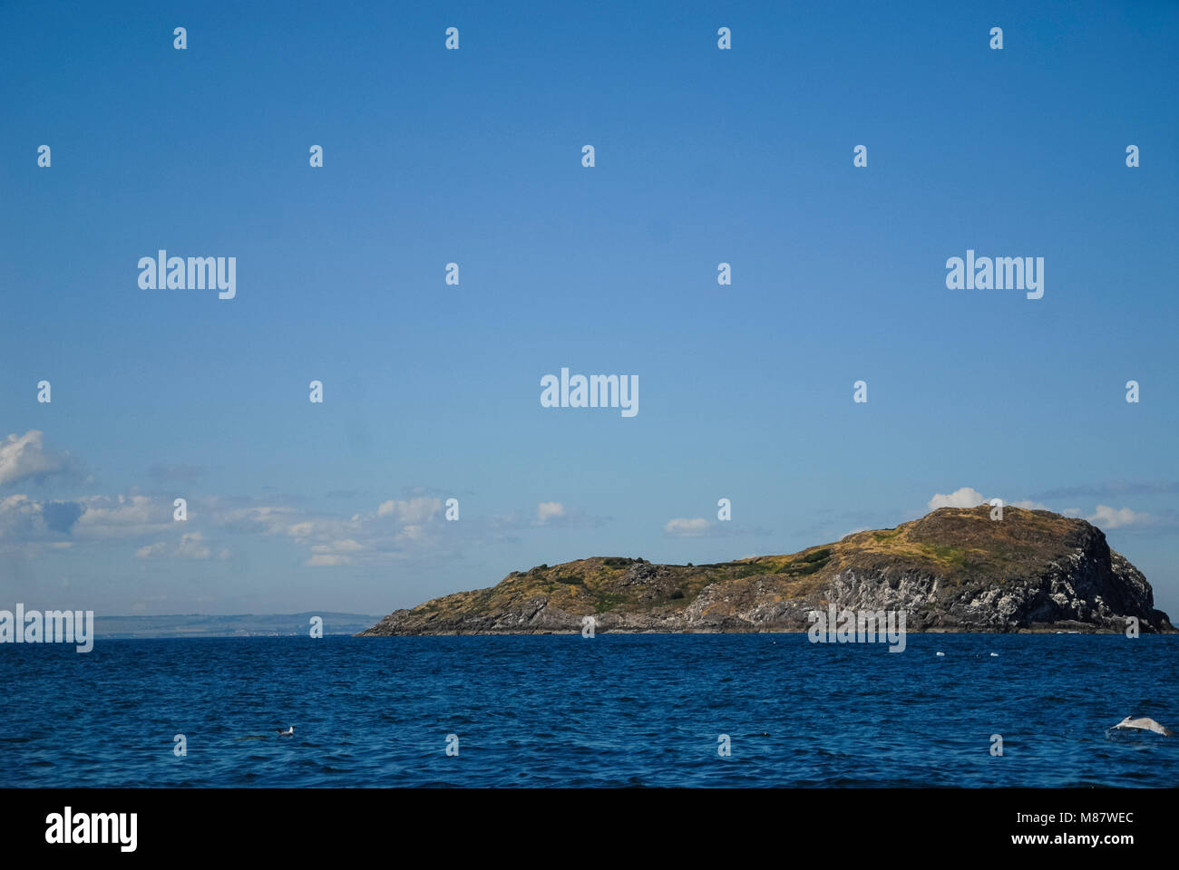 Bass Rock, Escocia Stockbild