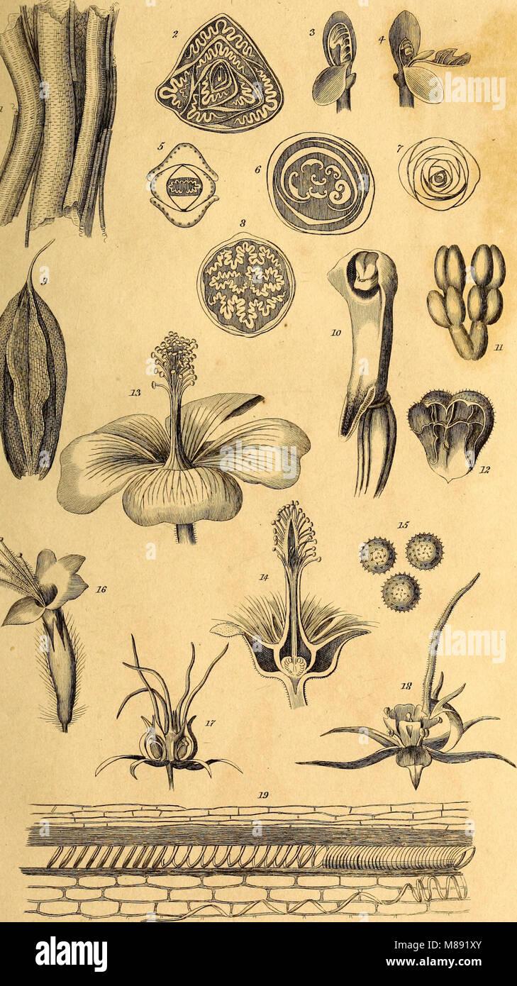 Elemente der Philosophie von Pflanzen - mit den Grundsätzen der ...