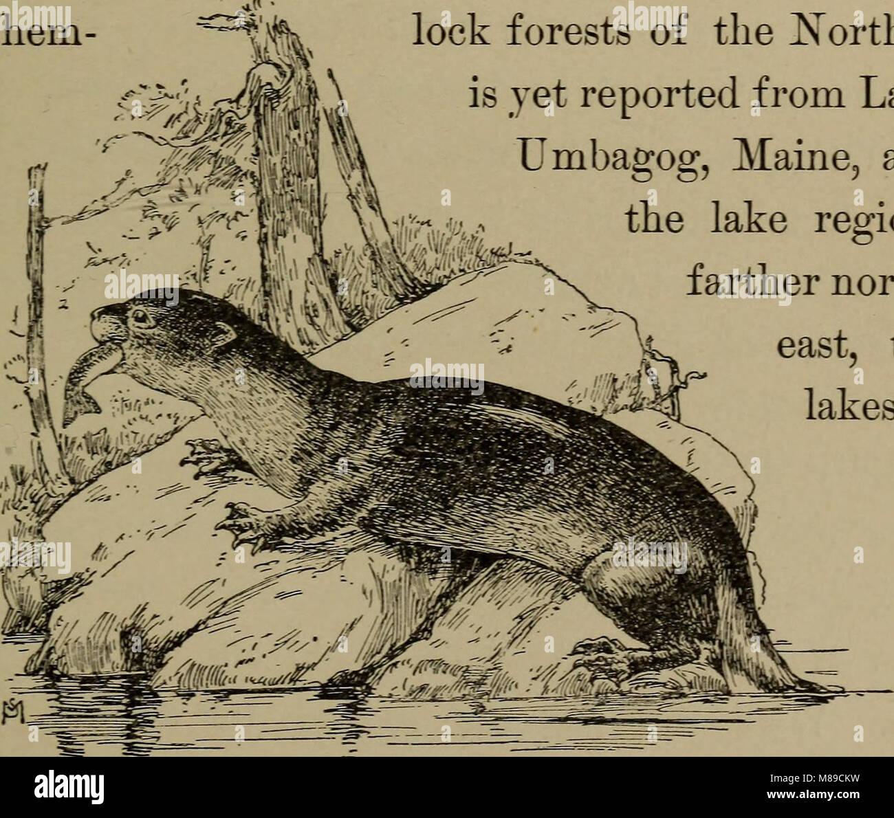 Vertraut leben in Feld und Wald; die Tiere, Vögel, Frösche und Salamander (1898) (14568749418) Stockfoto