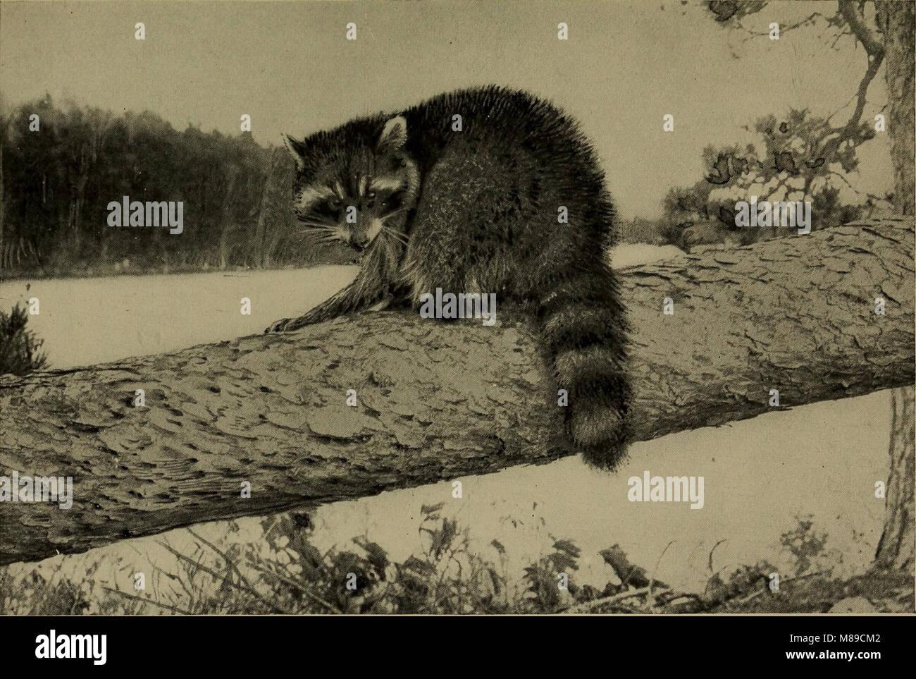 Vertraut leben in Feld und Wald; die Tiere, Vögel, Frösche und Salamander (1898) (14568966597) Stockfoto