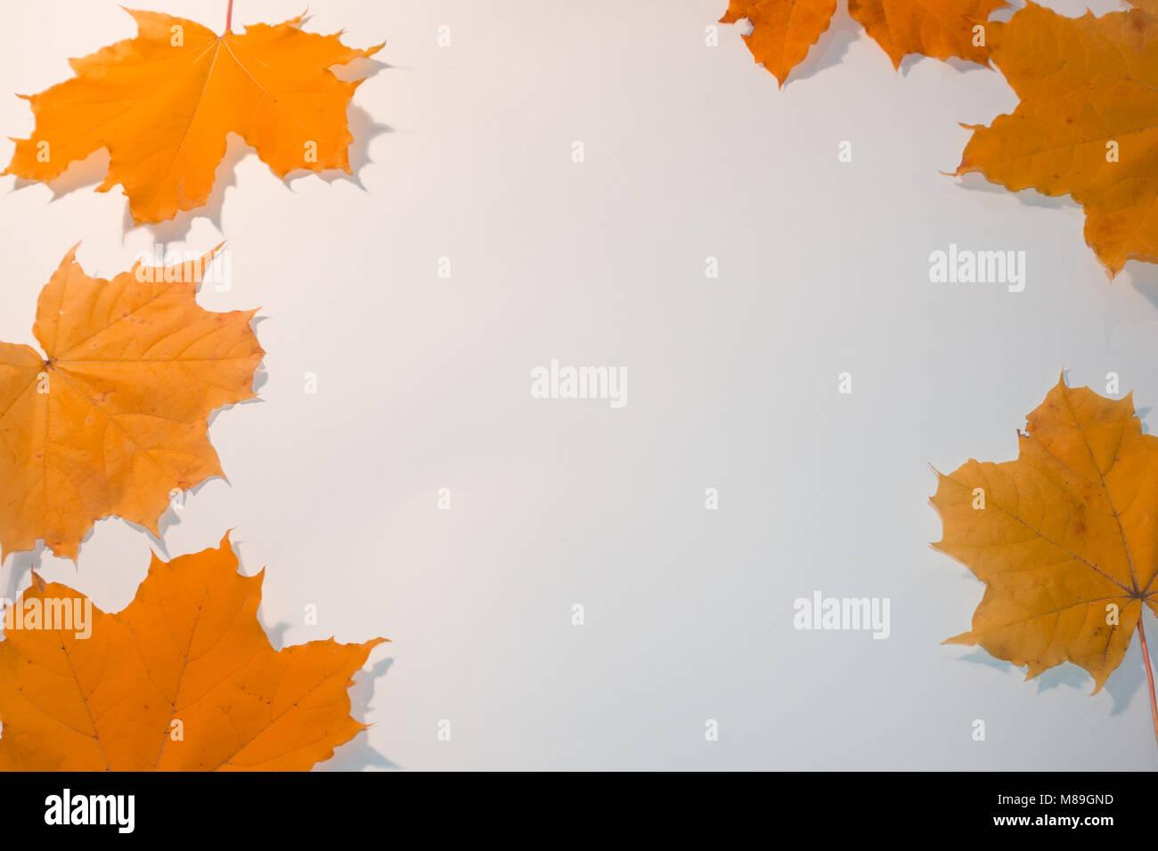 Bunte orange Ahornblätter mit Copy space frame. Stockfoto
