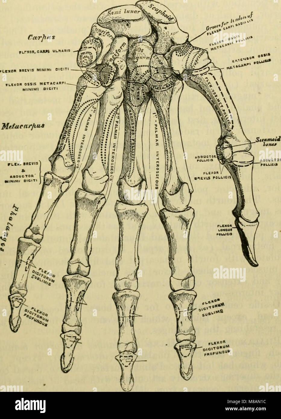Erfreut Kapitel 7 Anatomie Und Physiologie Ideen - Menschliche ...