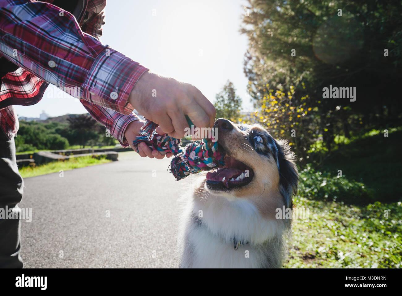 Mensch und Hund spielen mit Seil im Park, 7/8 Stockbild