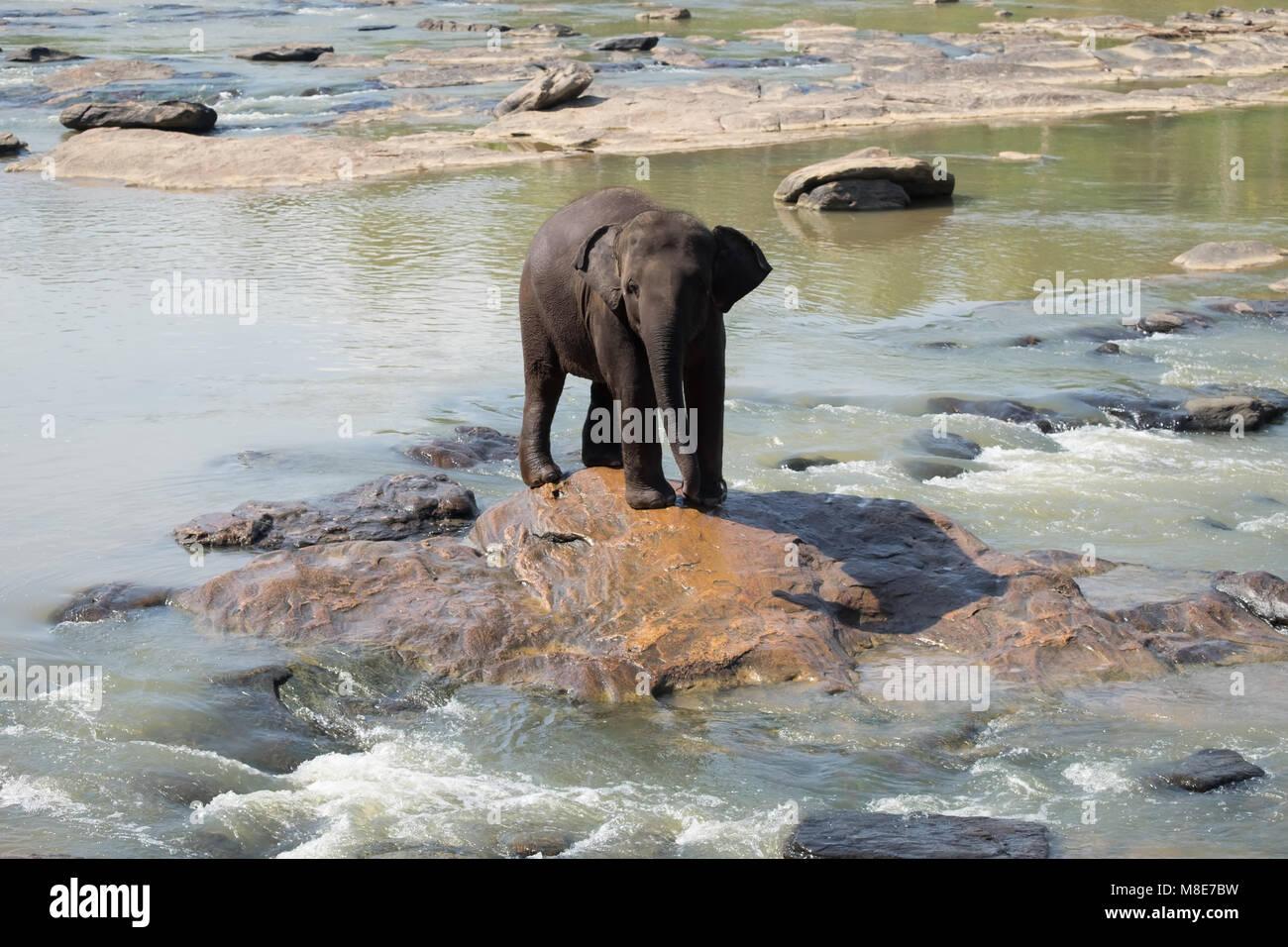 Großen Asiatischen Elefanten Entspannen Baden Und Die Kreuzung