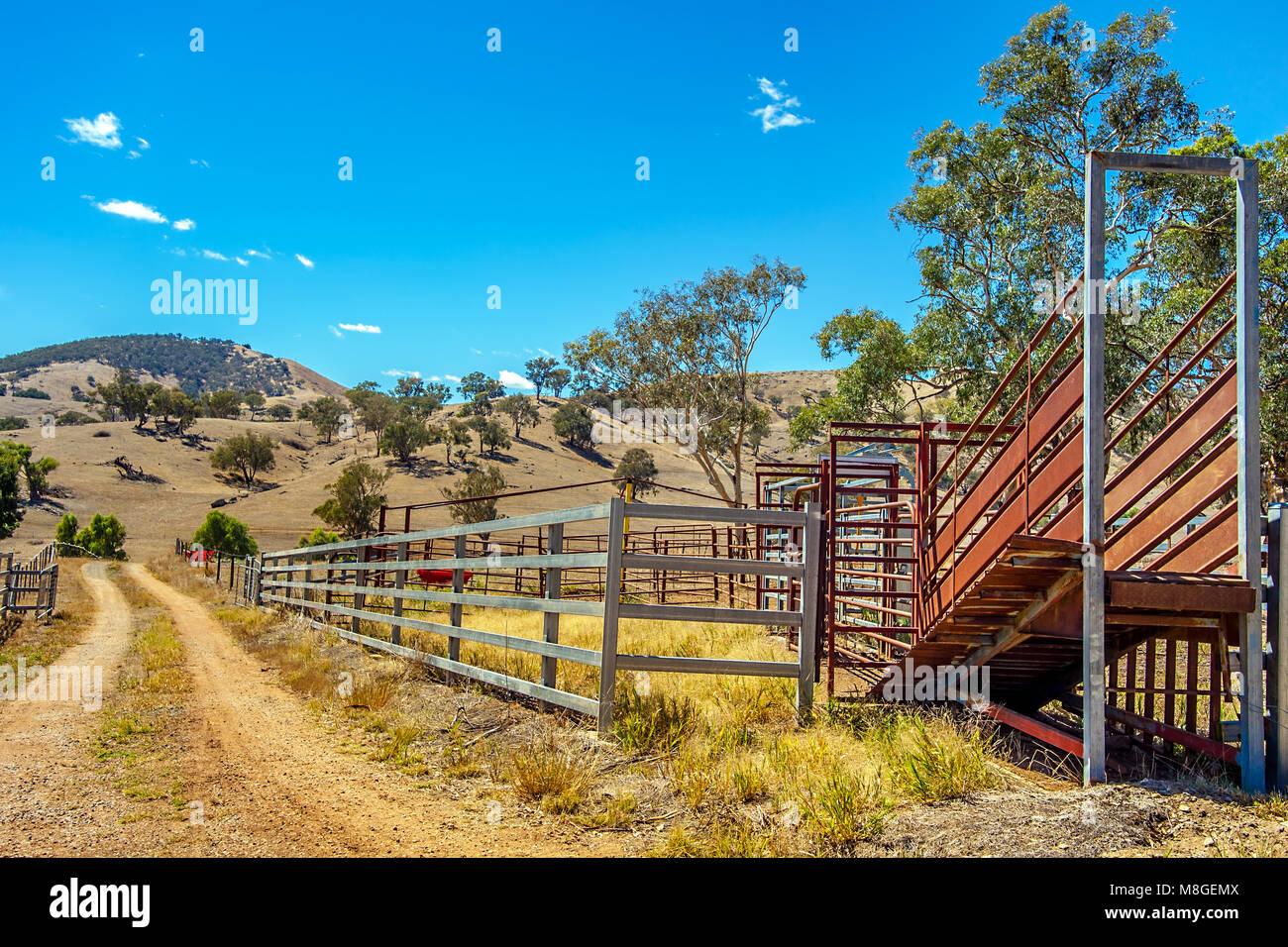 Schafe auf der Weide und Beladestation in New South Wales, Australien Stockbild
