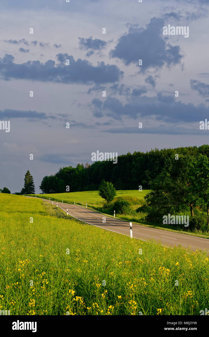 Straße auf der Schwäbischen Alb in der Nähe von Feldstetten, Baden-Württemberg, Deutschland Stockbild