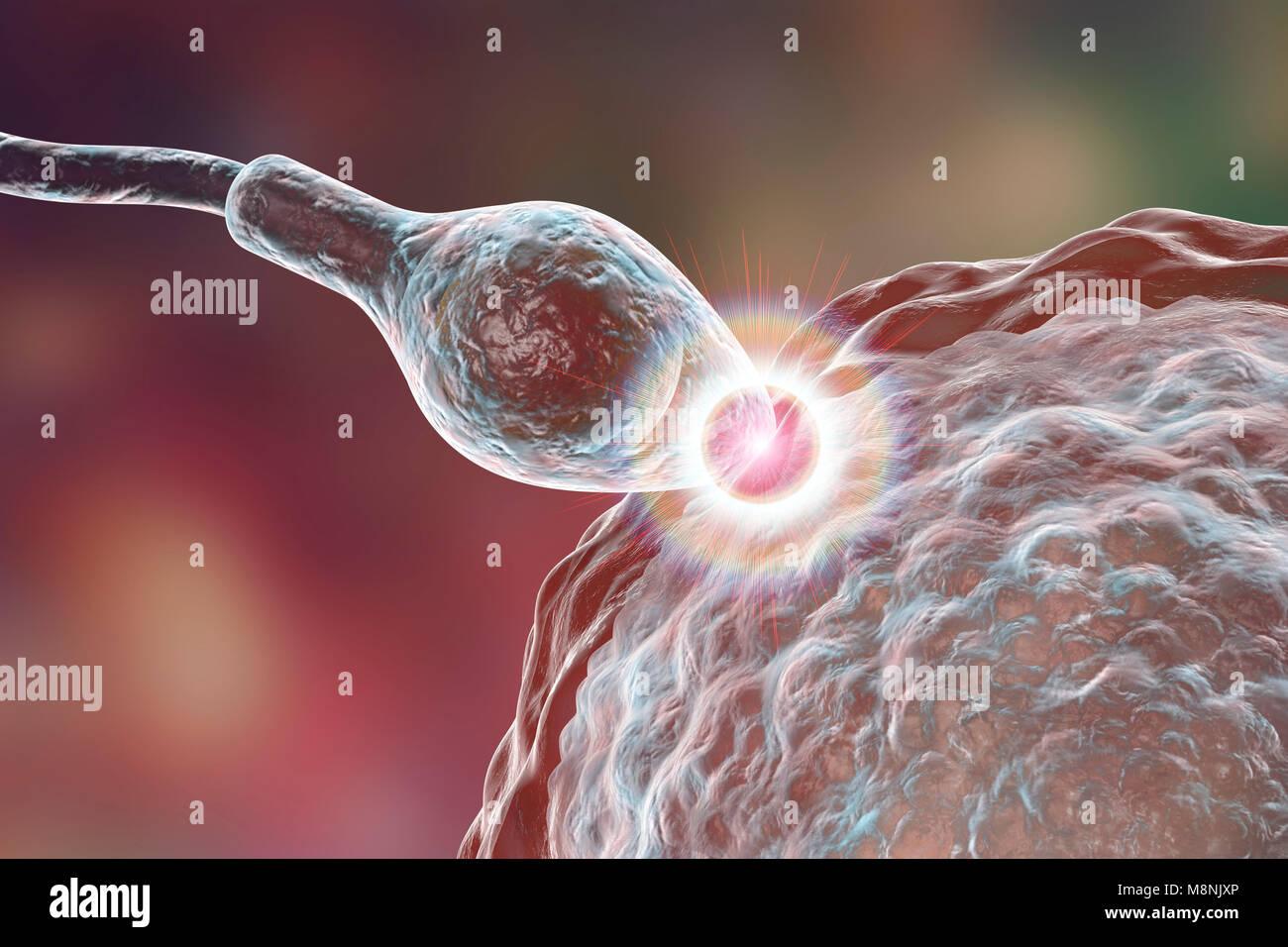 Spermien befruchtete Ei, computer Abbildung. Die Samenzellen hat ...