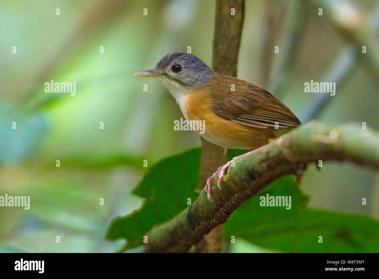 Vogel Bild von Most Shapiro Stockbild