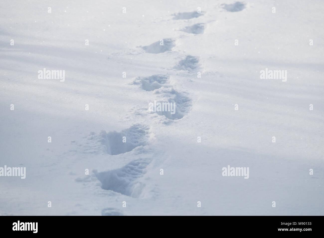 Spuren durch den Schnee Stockbild