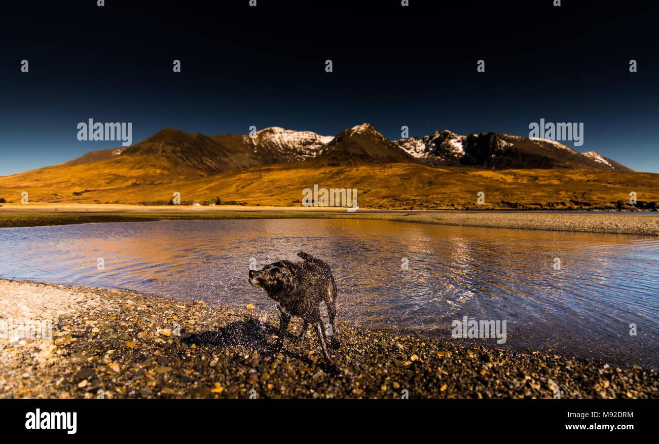 Hund auf Spin Cycle am Glen spröde Strand Stockbild