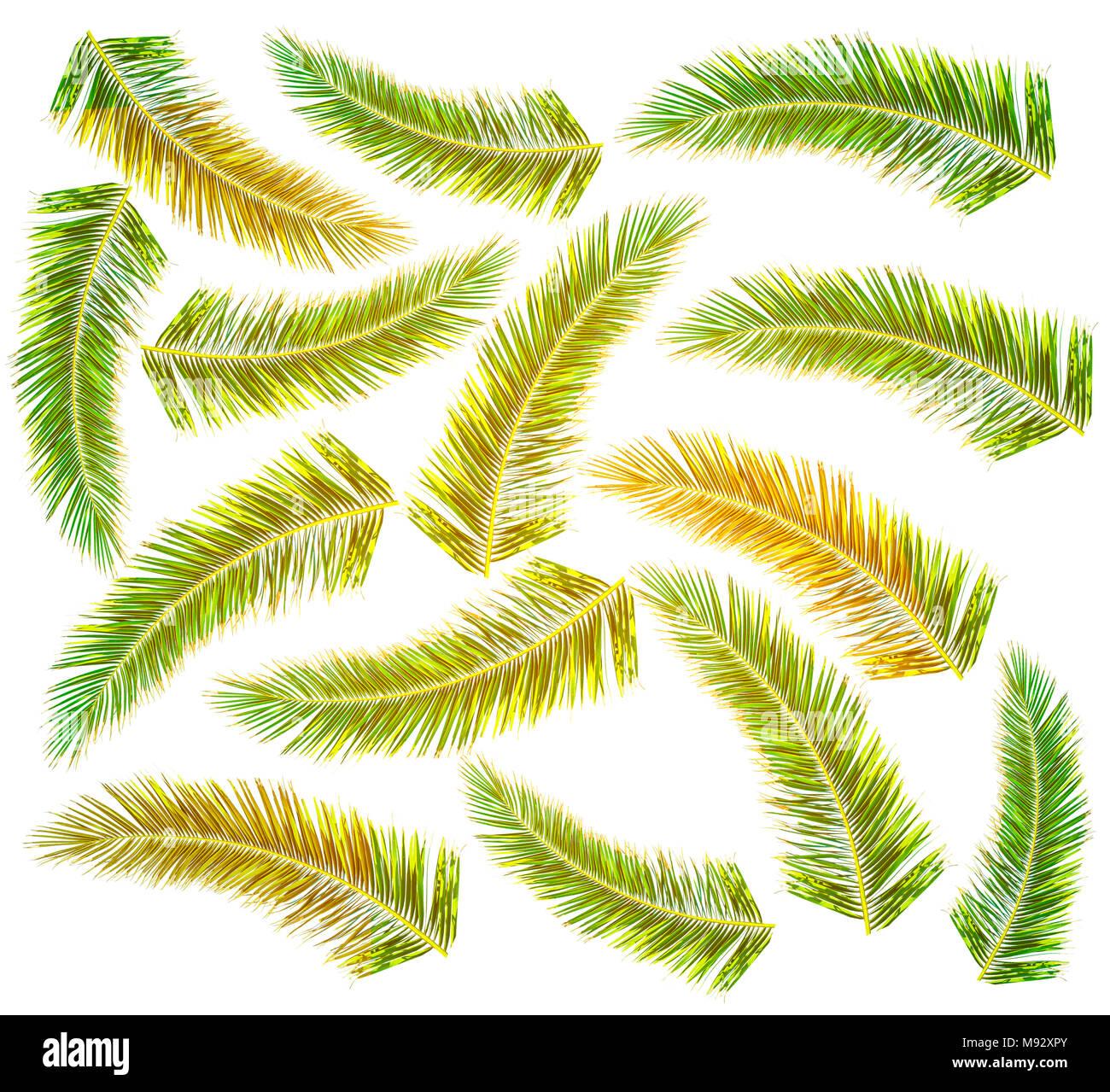 Ungewöhnlich Palme Färbung Bilder - Malvorlagen Von Tieren - ngadi.info