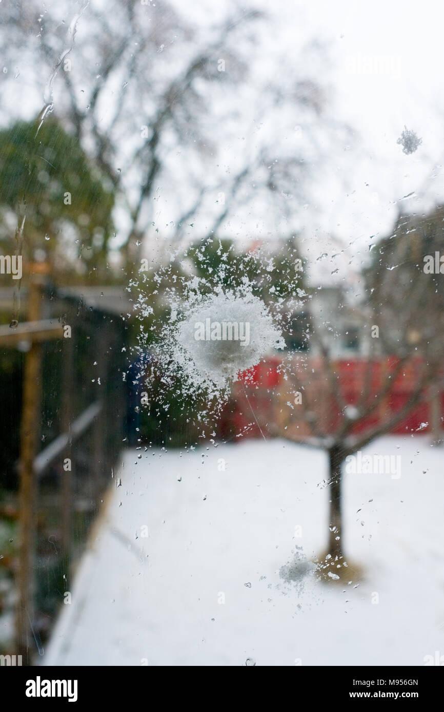 Nahaufnahme von einem Schneeball, die gegen ein Glas Fenster geworfen wurde, mit privatem Garten im Schnee im Hintergrund Stockbild