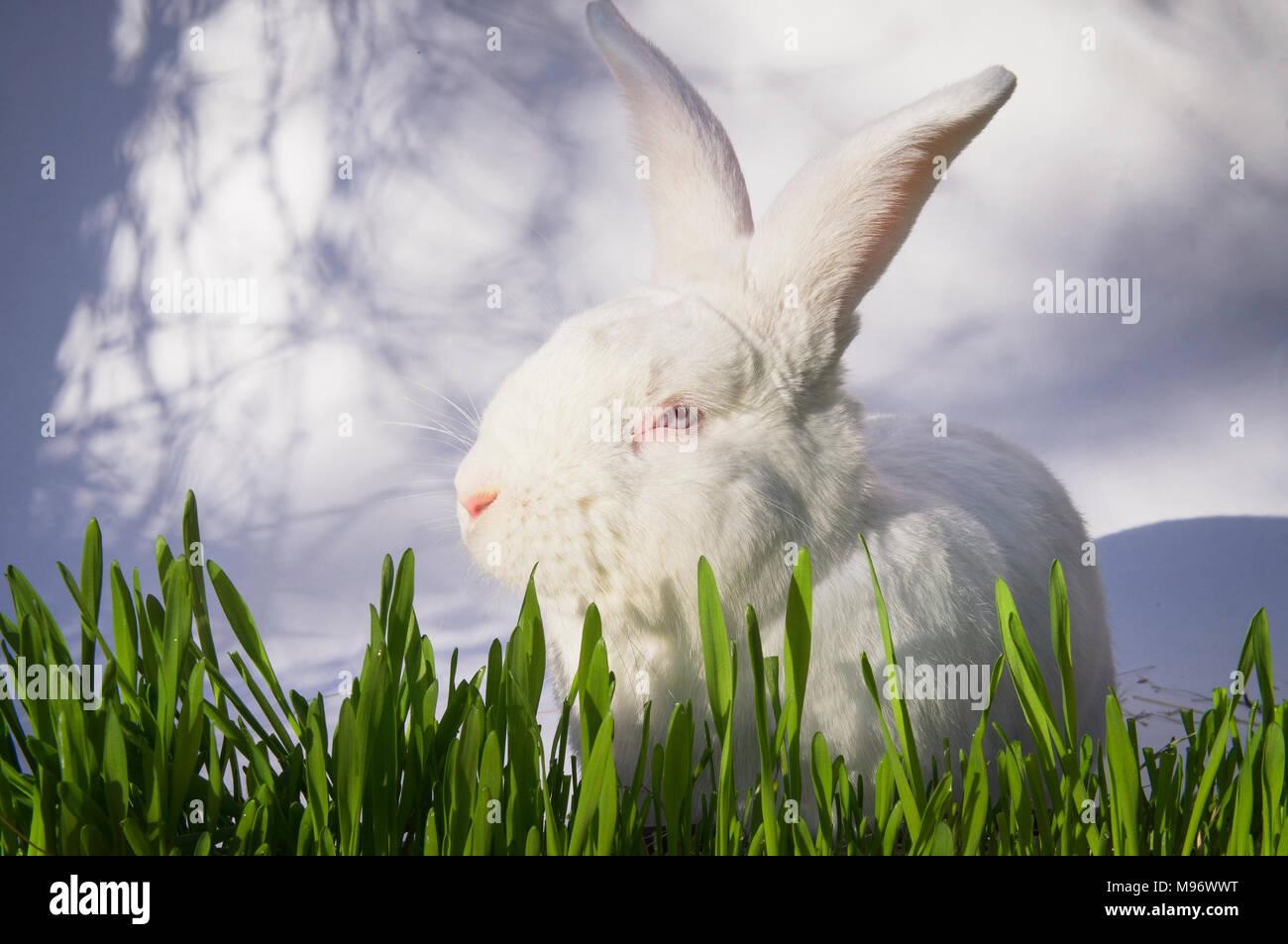Ostern Bunny Hase Weiss Grun Gras Saen Dekoration Abbildung
