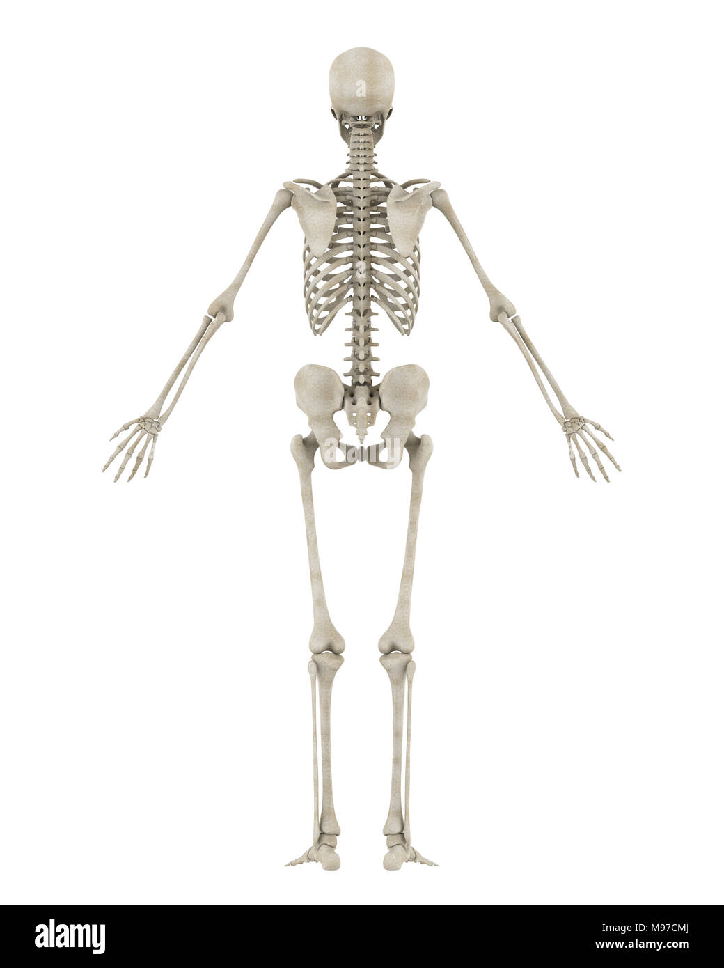 Groß Fuß Skelettanatomie Zeitgenössisch - Menschliche Anatomie ...
