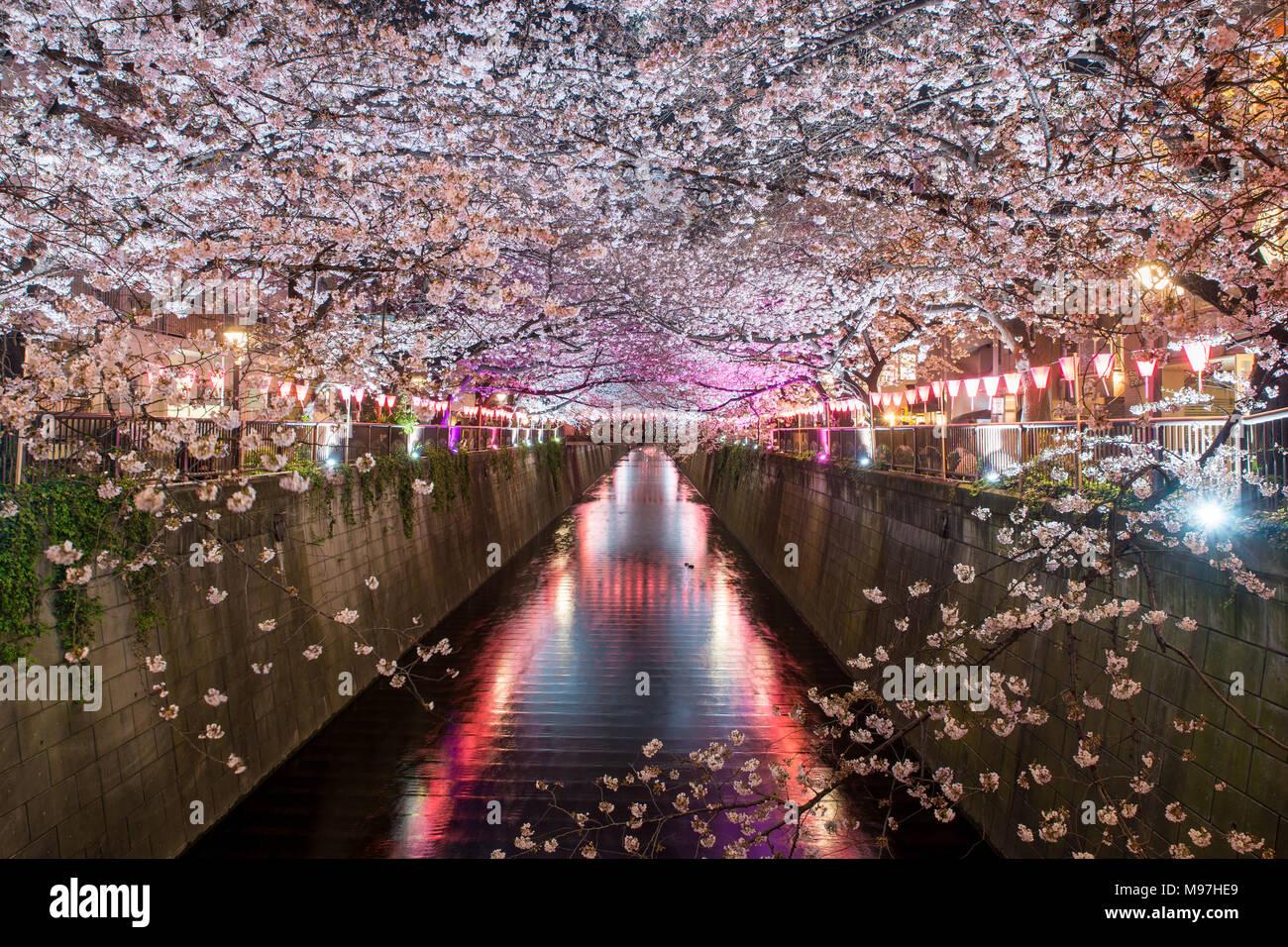 Kirschblüte ausgekleidet Meguro Kanal in der Nacht in Tokio, Japan. Frühling im April in Tokio, Japan. Stockfoto