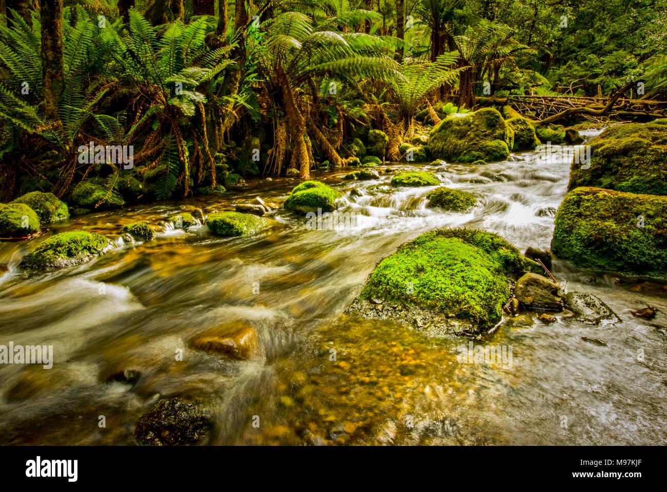 Australien, Tasmanien, Lemonthyme Lodge, rundwegzellen, Schützgebiet Stockbild
