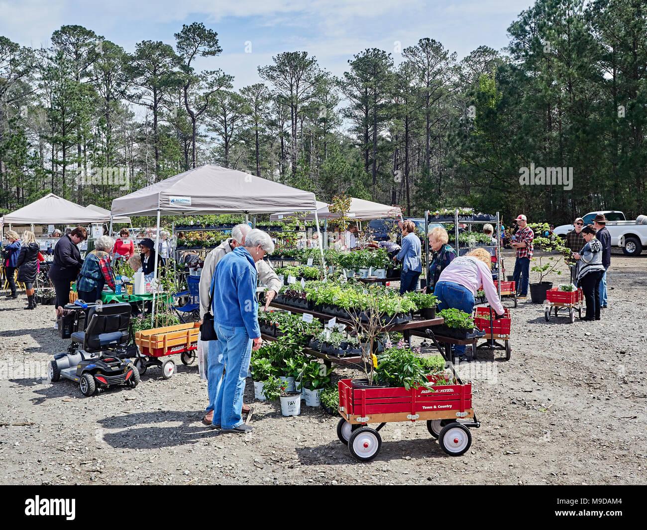 Reife Pflanzen zu verkaufen