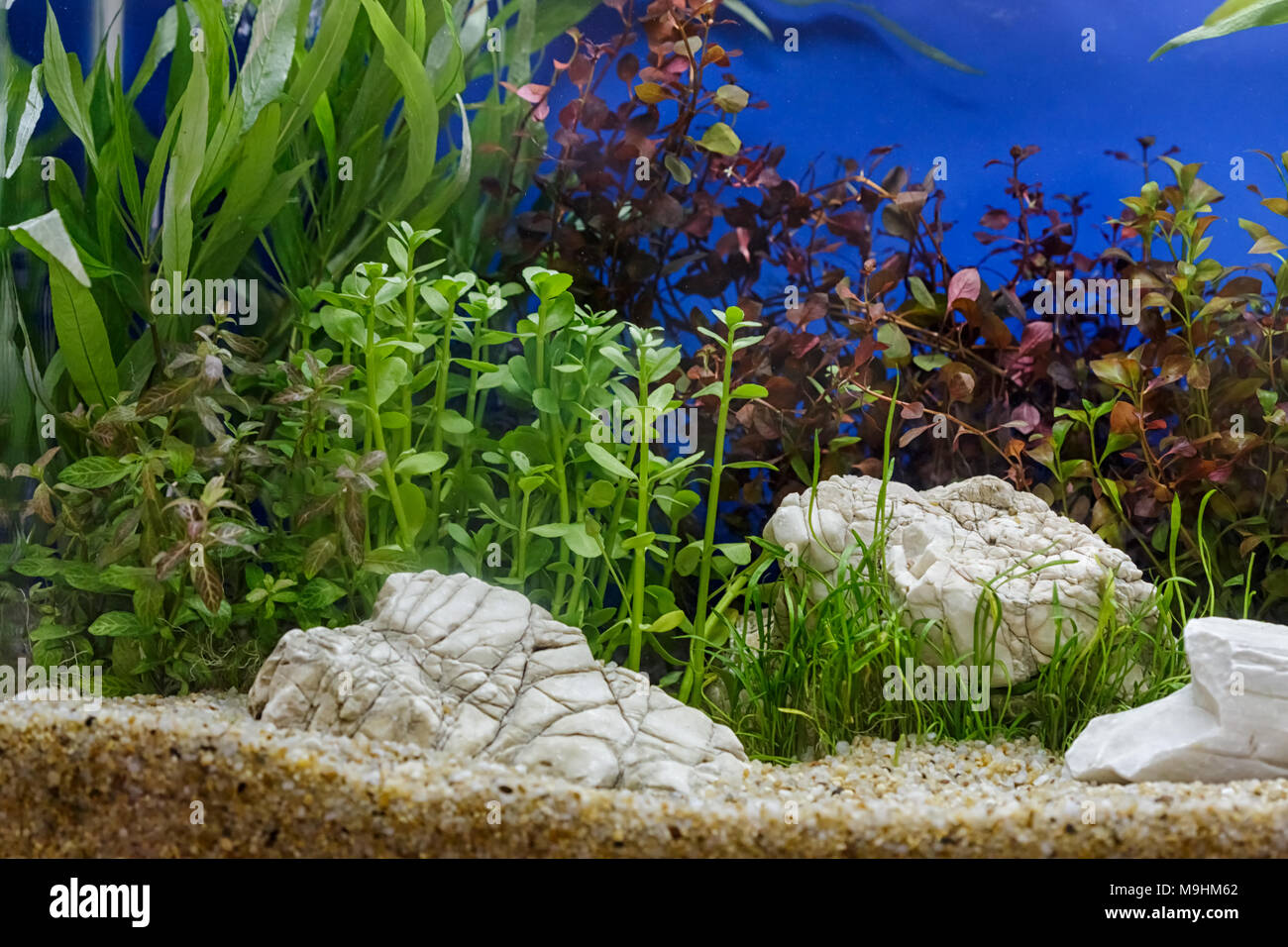 aquarium pflanzen dekoration aquatische farn und aquarium pflanzenwachstum im aquarium tank. Black Bedroom Furniture Sets. Home Design Ideas