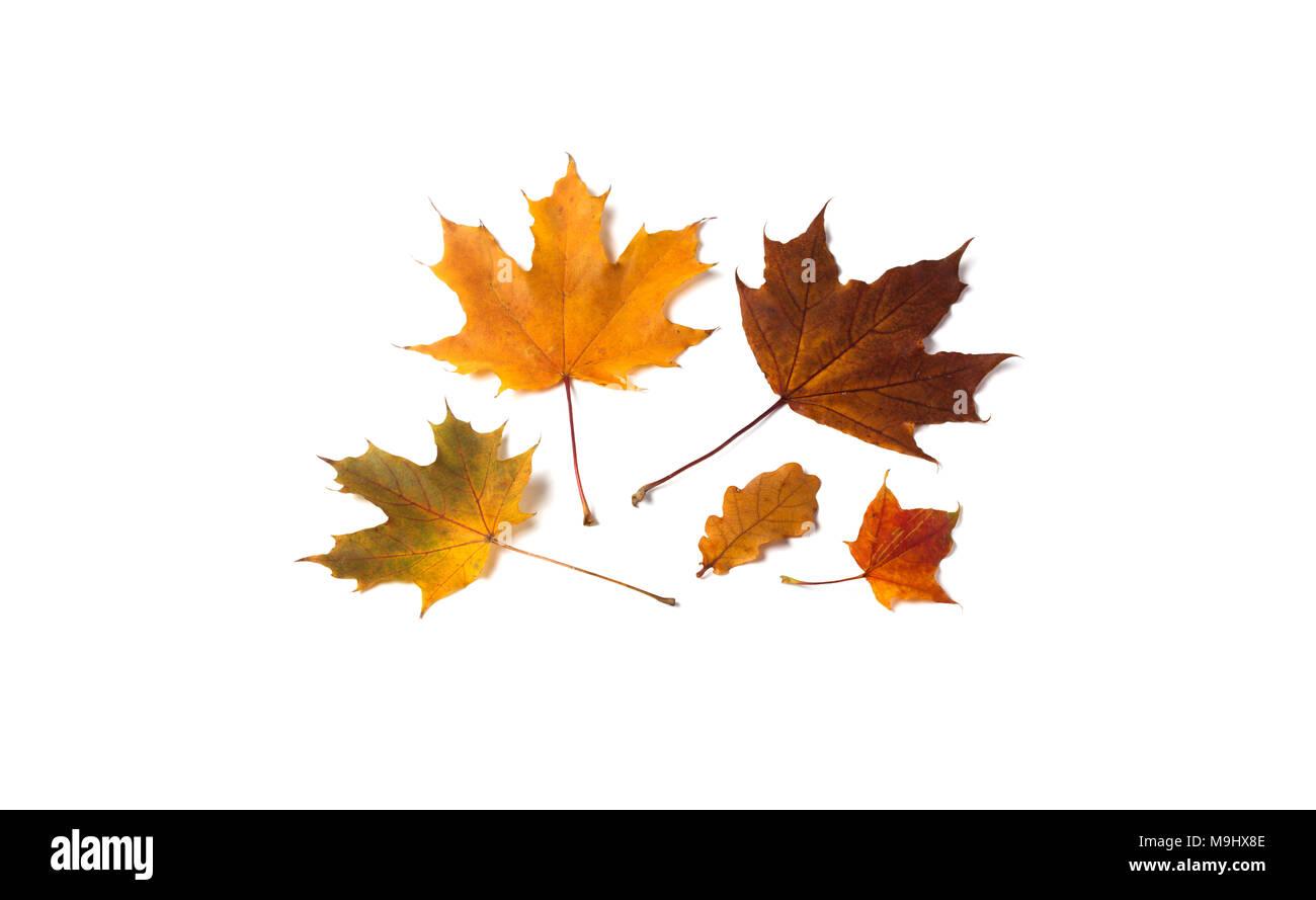 Ungewöhnlich Herbst Färbung Ausdrucke Fotos - Beispiel Anschreiben ...