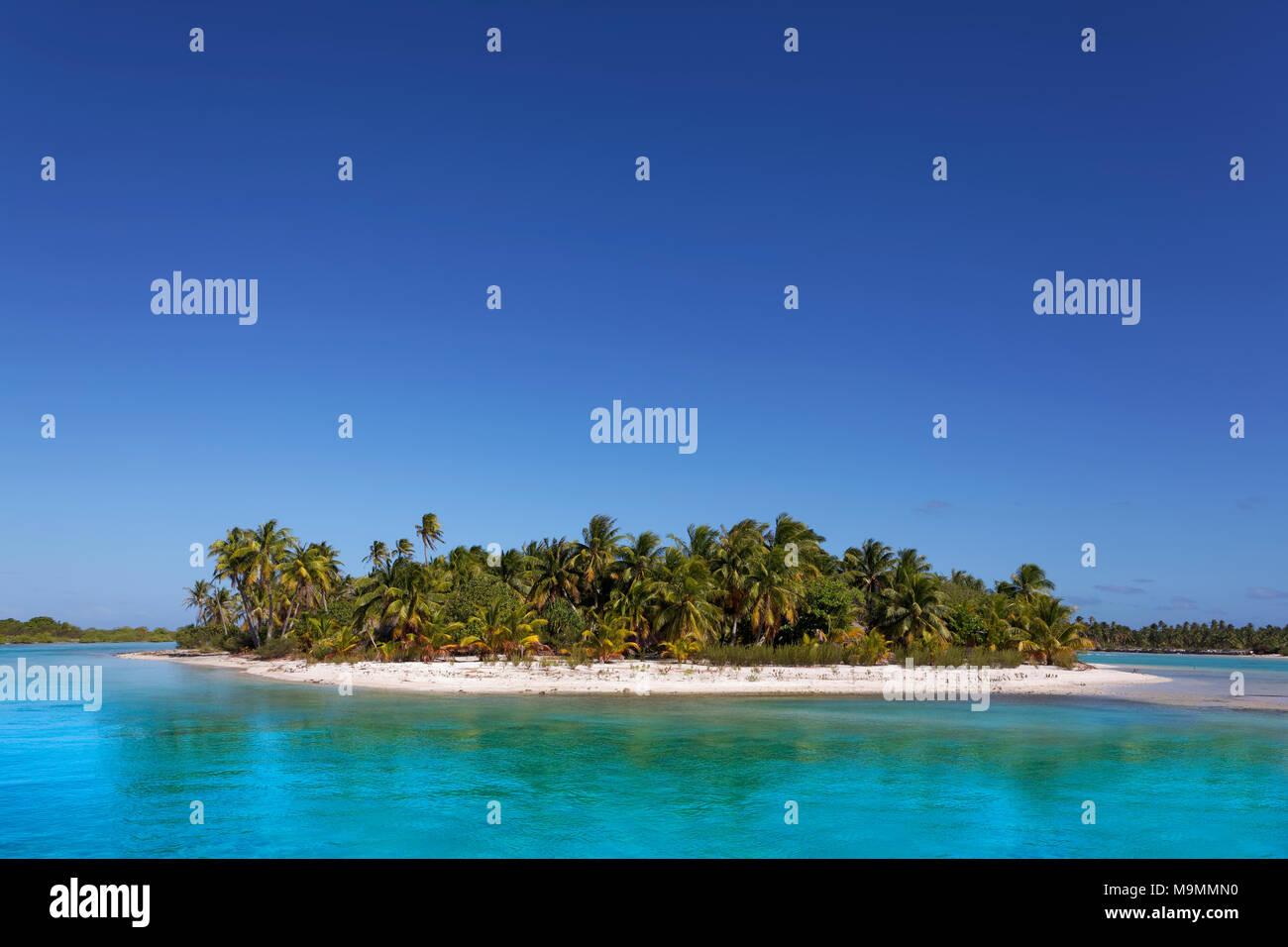 Einsame Insel, die in der Lagune, Strand mit Palmen, türkisfarbenes Wasser, Tikehau Atoll, Tuamotu-Archipel, Gesellschaft Inseln Stockbild