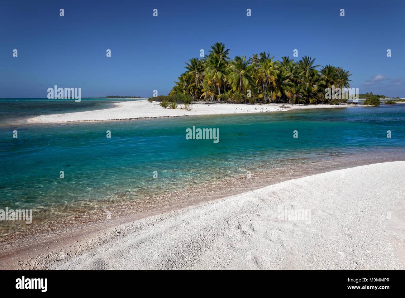 Einsame Insel, Strand mit Palmen, Tikehau Atoll, Tuamotu Archipel, Gesellschaftsinseln, Windward Islands, Französisch-Polynesien Stockfoto