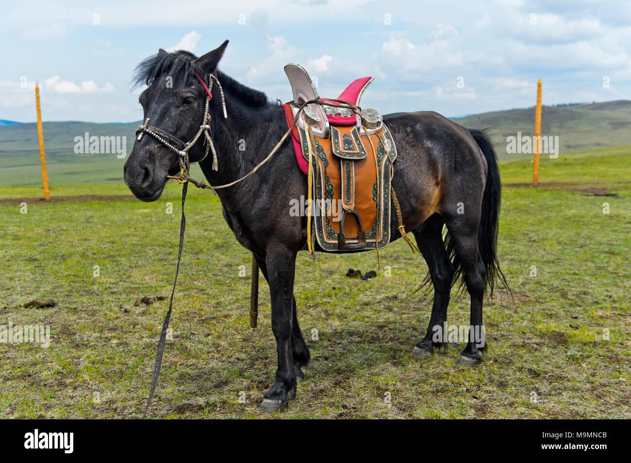 Gezähmte Pferd eines Nomad mit traditionellen Sattel in der Steppe der Mongolei Stockbild