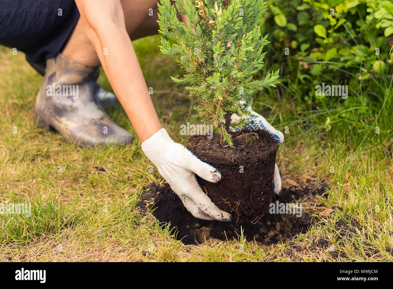 H nde einen baum pflanzen n he zu sehen stockfoto bild for Raum pflanzen