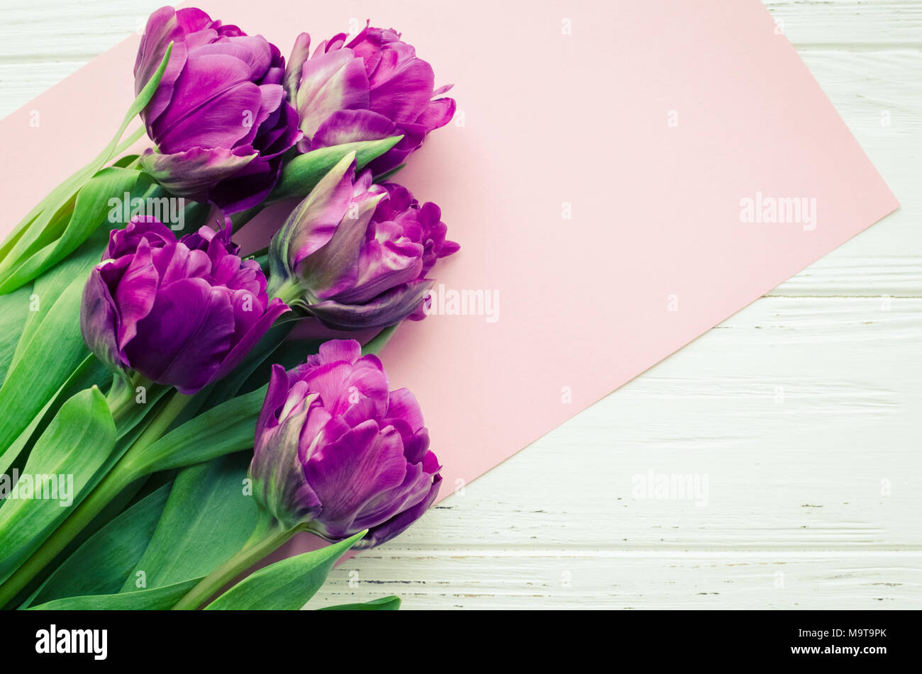 uv tulpe blumen auf wei shabby chic holz hintergrund blumenstrau aus lila fr hling tulpen. Black Bedroom Furniture Sets. Home Design Ideas