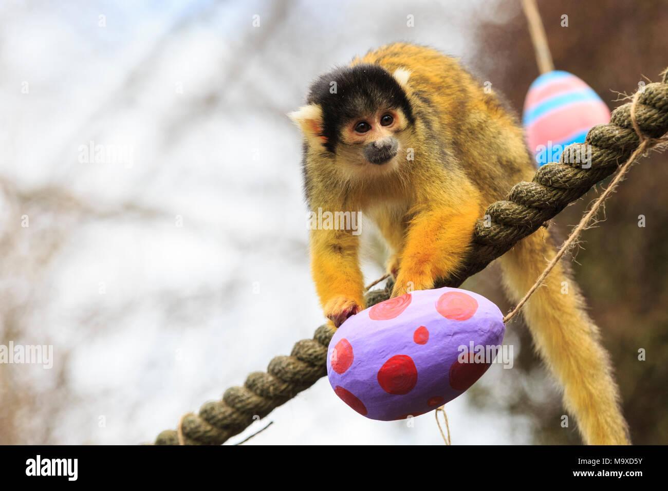Easter Surprise Stockfotos & Easter Surprise Bilder - Seite 9 - Alamy
