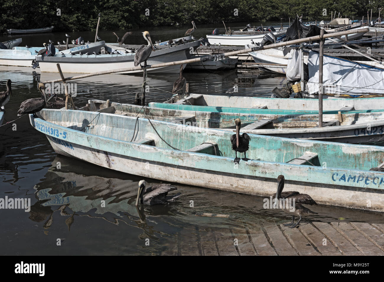Fischerboote in der darsena de San Francisco, Campeche, Mexiko Stockbild