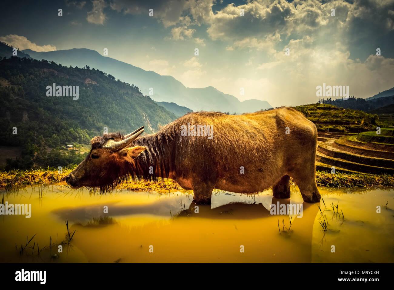 Asien, Südostasien, Nordvietnam, Vietnam, Sapa, Berge, Bergwelt Stockbild