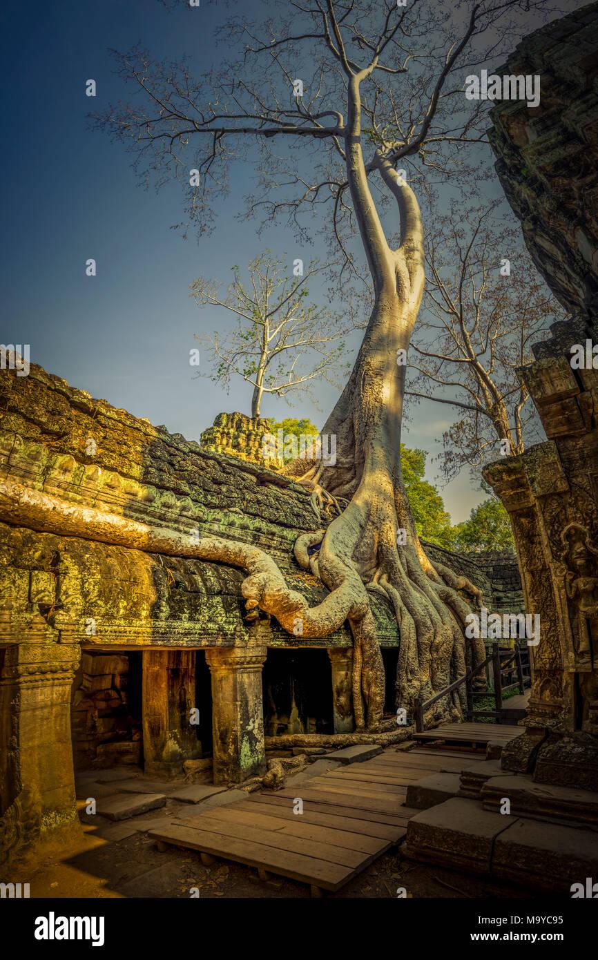 Asien, Kambodscha, Angkor Wat, Ta Prohm Stockbild