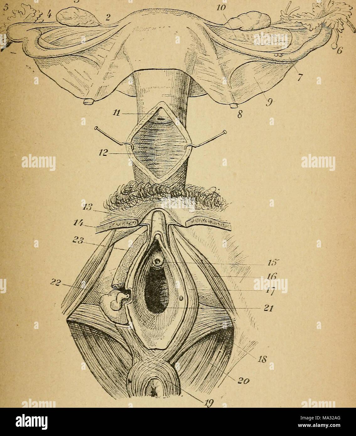 Wunderbar Anatomie Und Physiologie Worte Bilder - Physiologie Von ...
