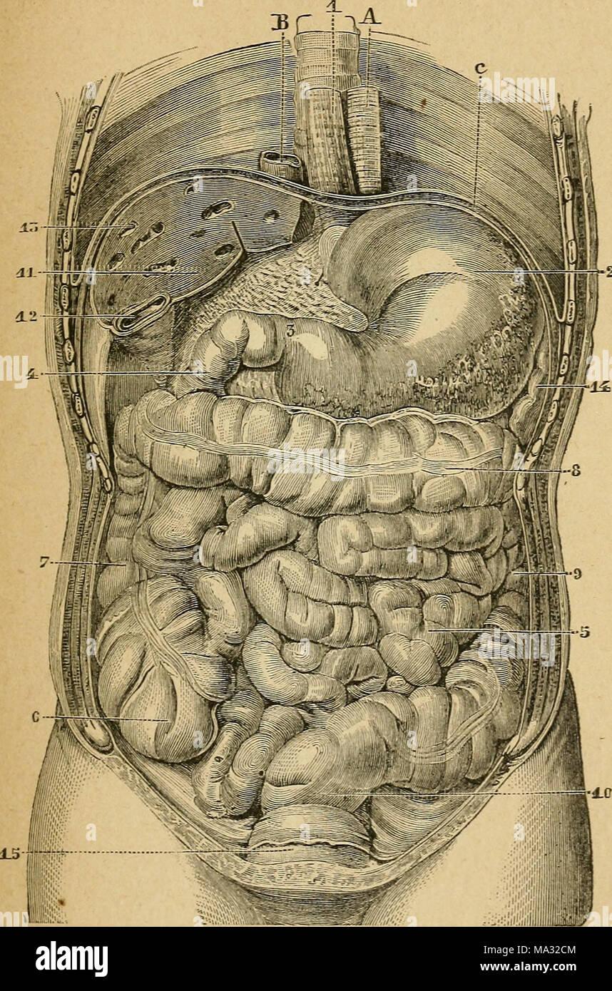 Großzügig Anatomie Und Physiologie Worte Bilder - Menschliche ...