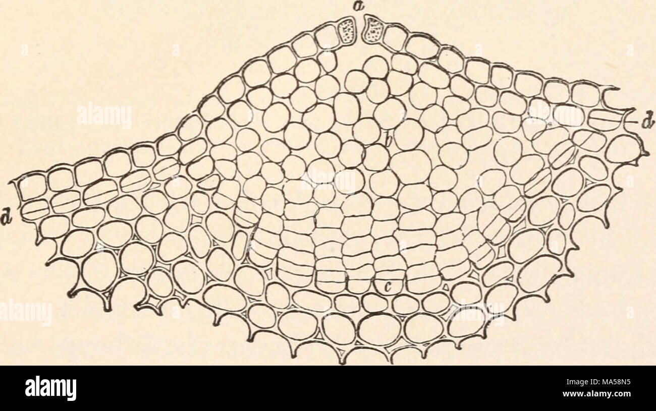 Elemente der Pflanze Anatomie Stockfoto, Bild: 178366865 - Alamy