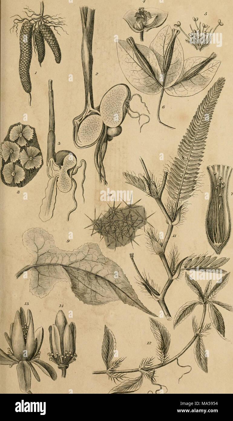 Elemente der Philosophie von Pflanzen: mit den Prinzipien der ...