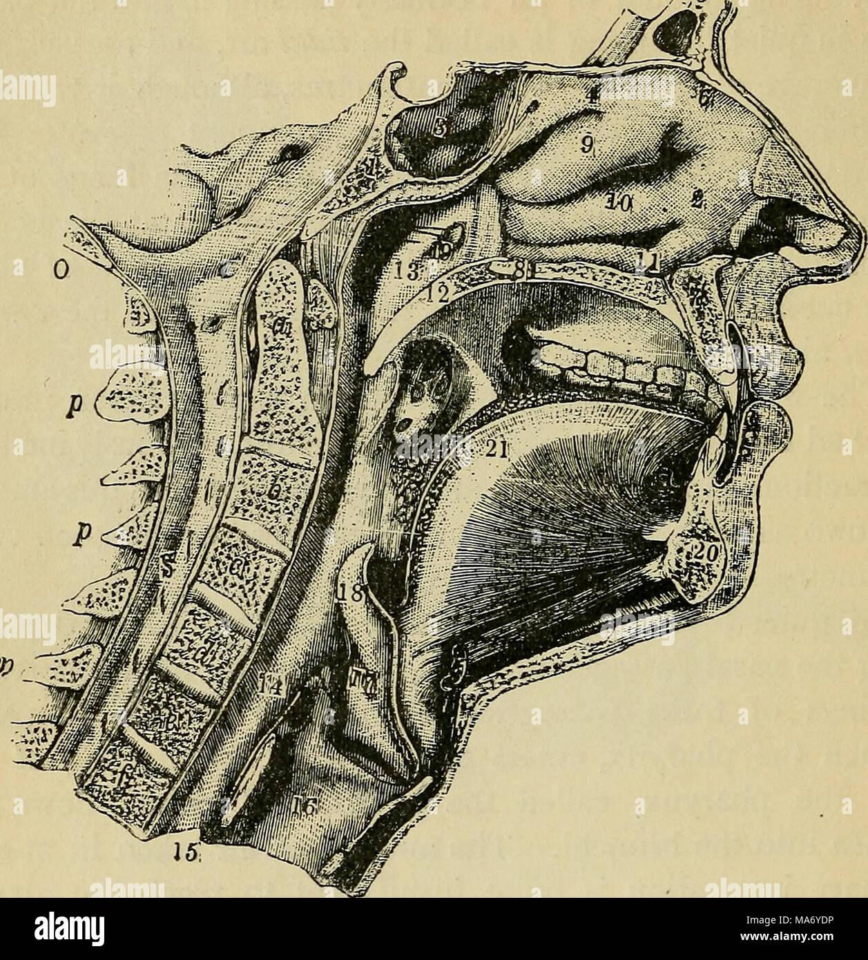 Elementare Physiologie. Abb. 91.-medialen Bereich von Gesicht und ...