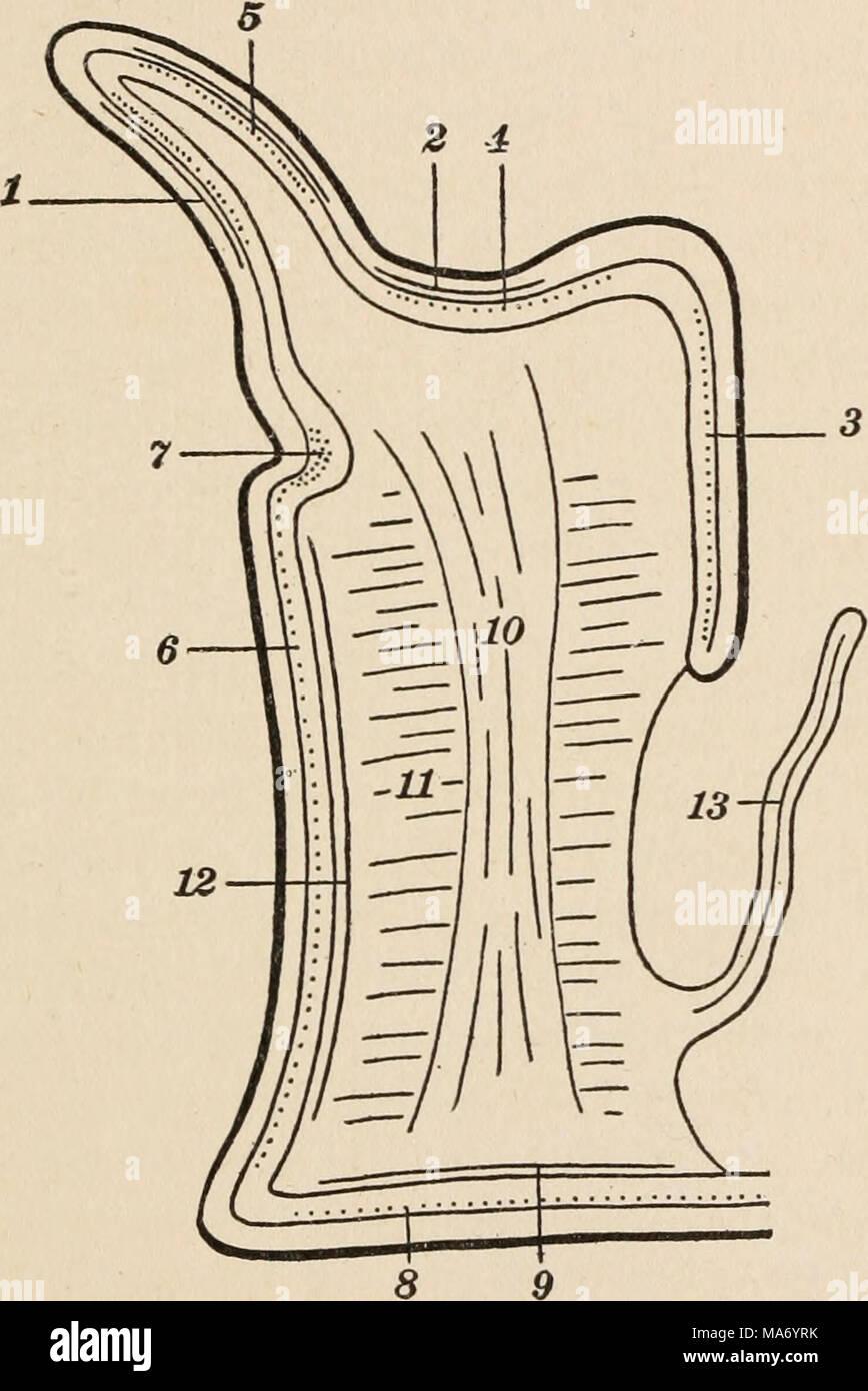 Wunderbar Muskeldiagramm Zurück Fotos - Menschliche Anatomie Bilder ...