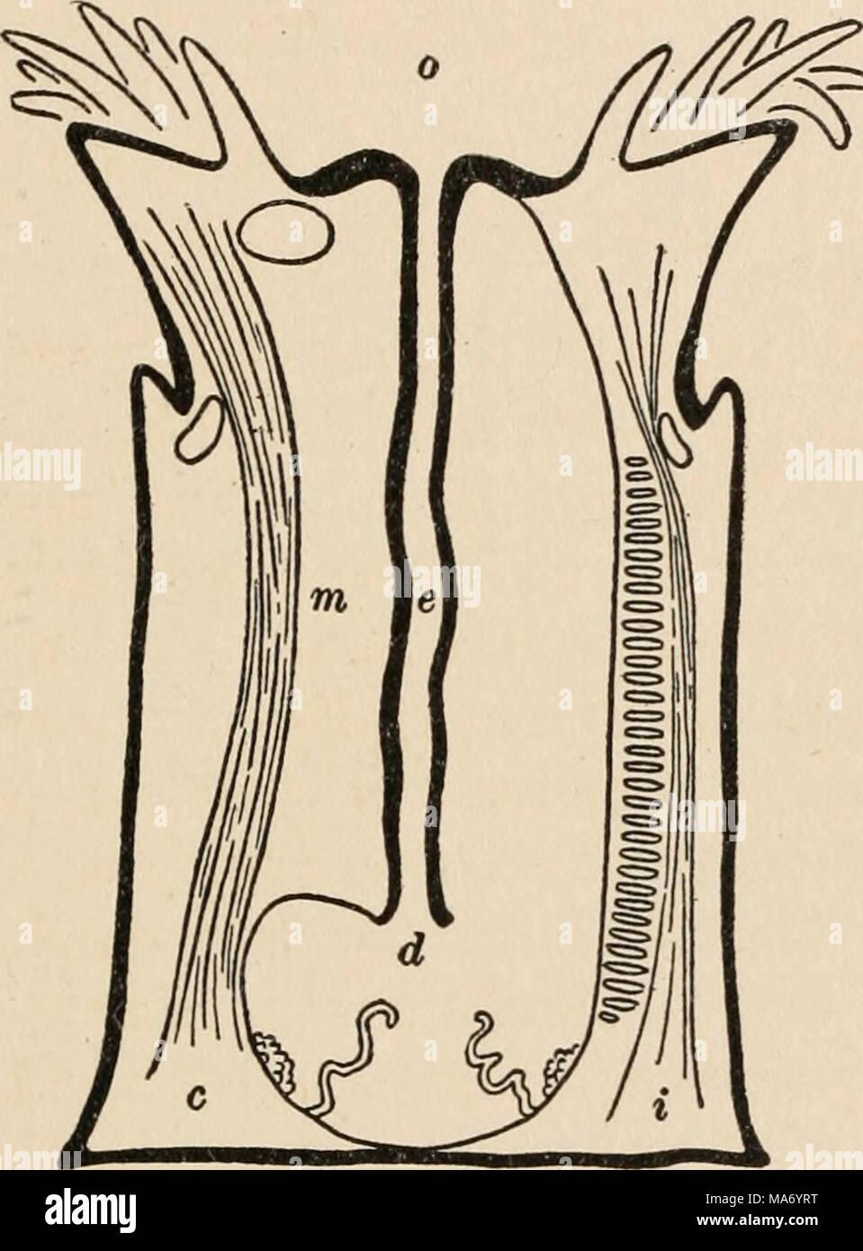 Groß Diagramm Der Internen Bauchorgane Fotos - Menschliche Anatomie ...