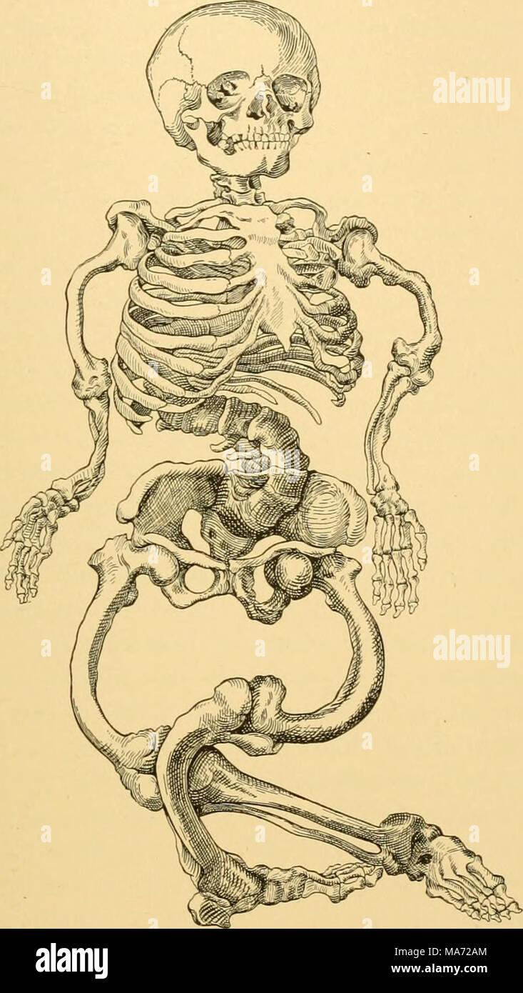 Berühmt Anatomie Eines Langen Knochens Arbeitsblatt Fotos ...