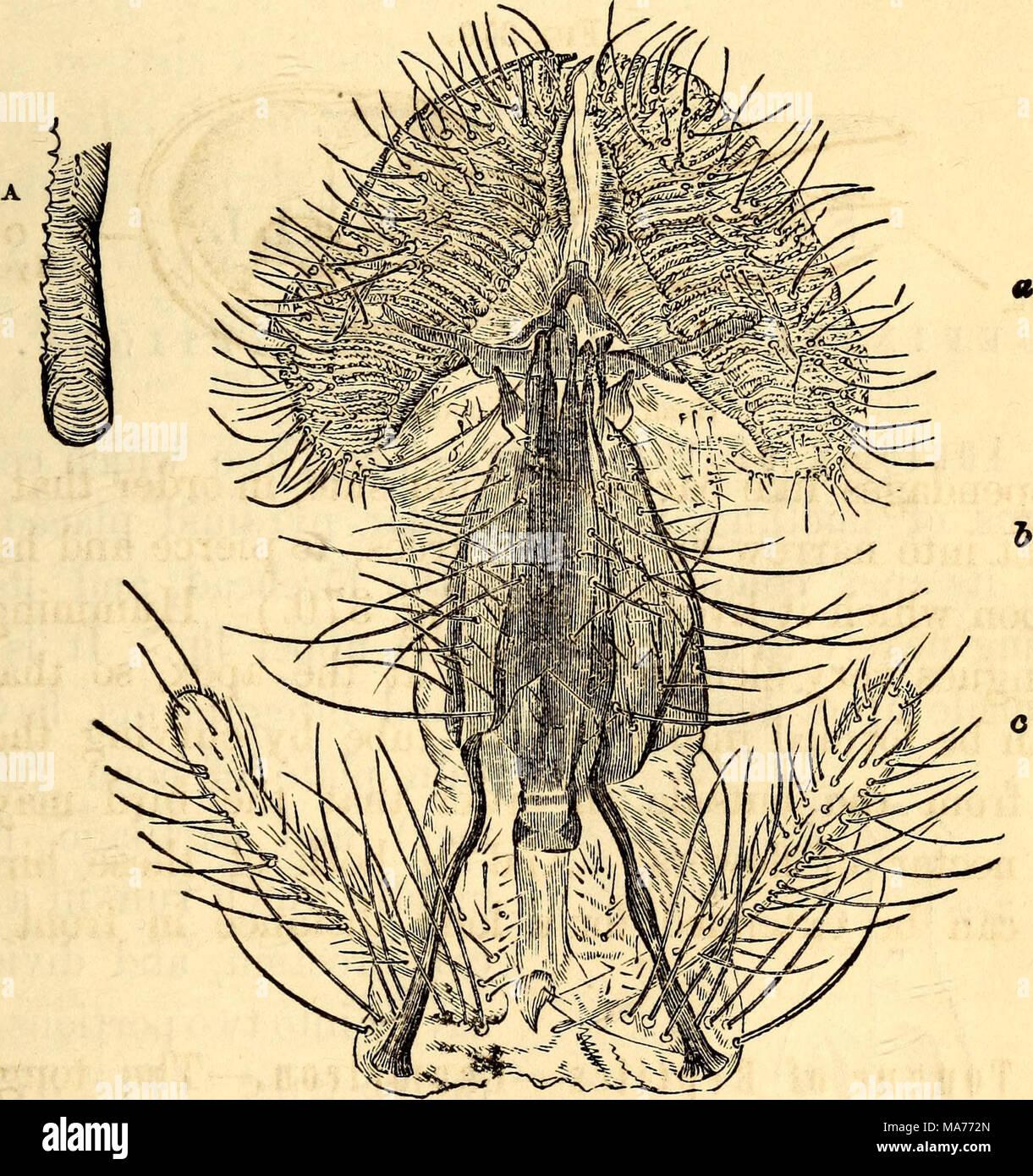Fantastisch Haupt In Anatomie Und Physiologie Fotos - Menschliche ...