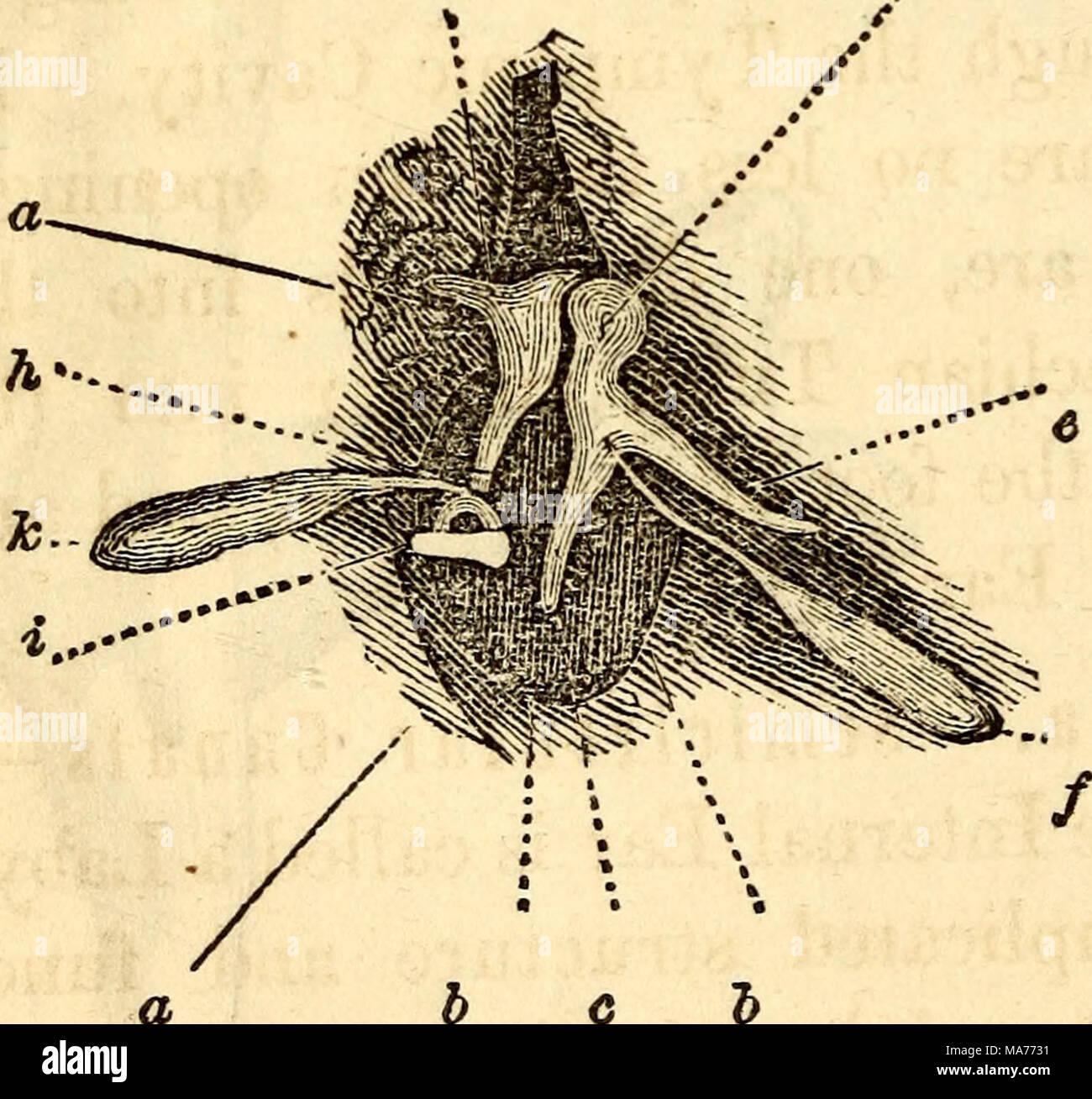 Ziemlich Anatomie Und Physiologie Des Ohres Bilder - Menschliche ...