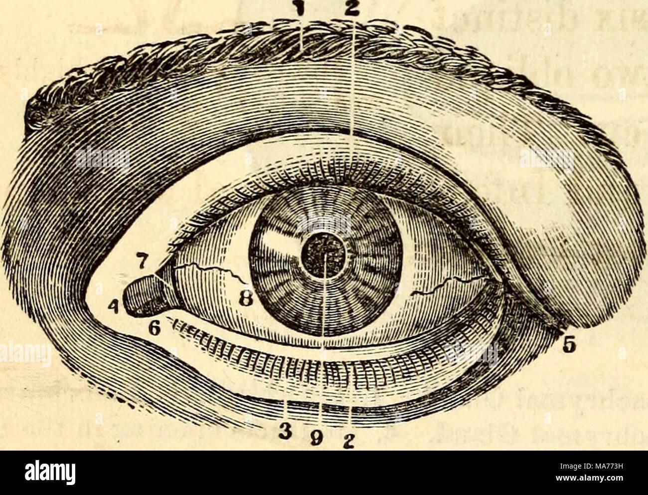 Fein Augenlid Anatomie Und Physiologie Galerie - Physiologie Von ...