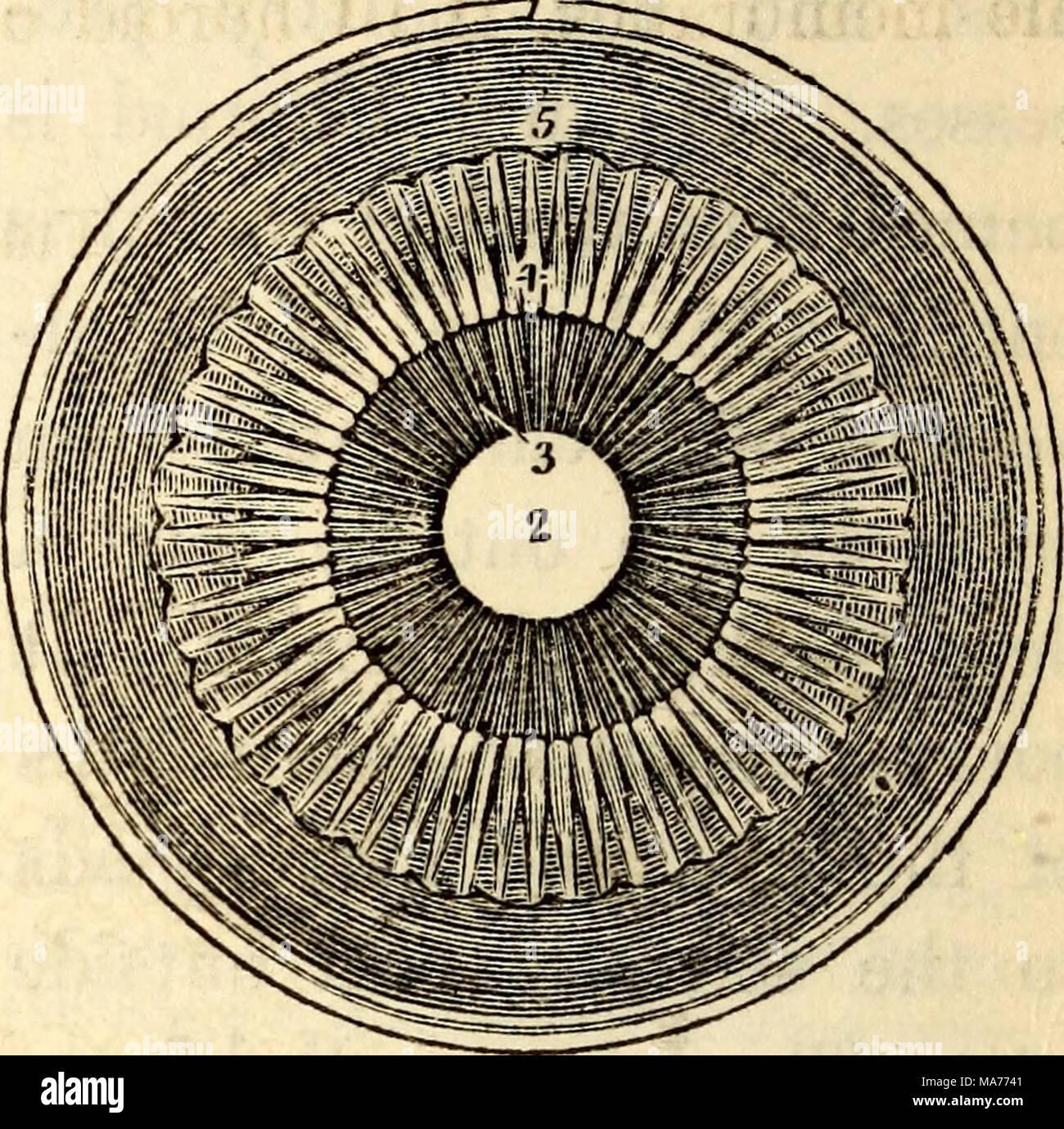 Fein Iris Anatomie Und Physiologie Bilder - Menschliche Anatomie ...