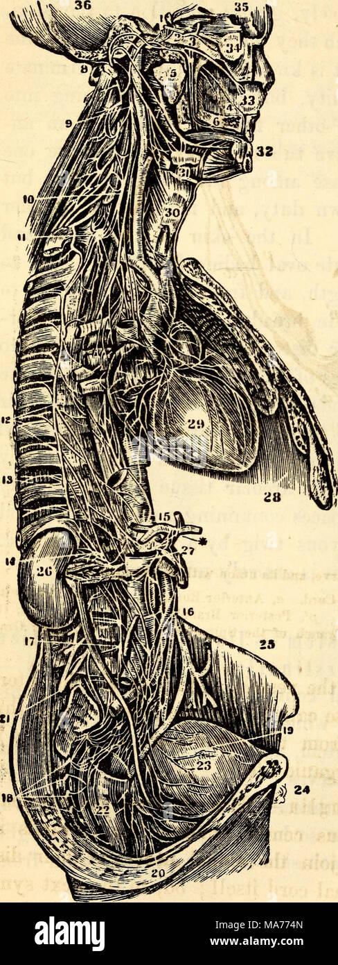 Großzügig Zweige Der Anatomie Und Physiologie Bilder - Menschliche ...