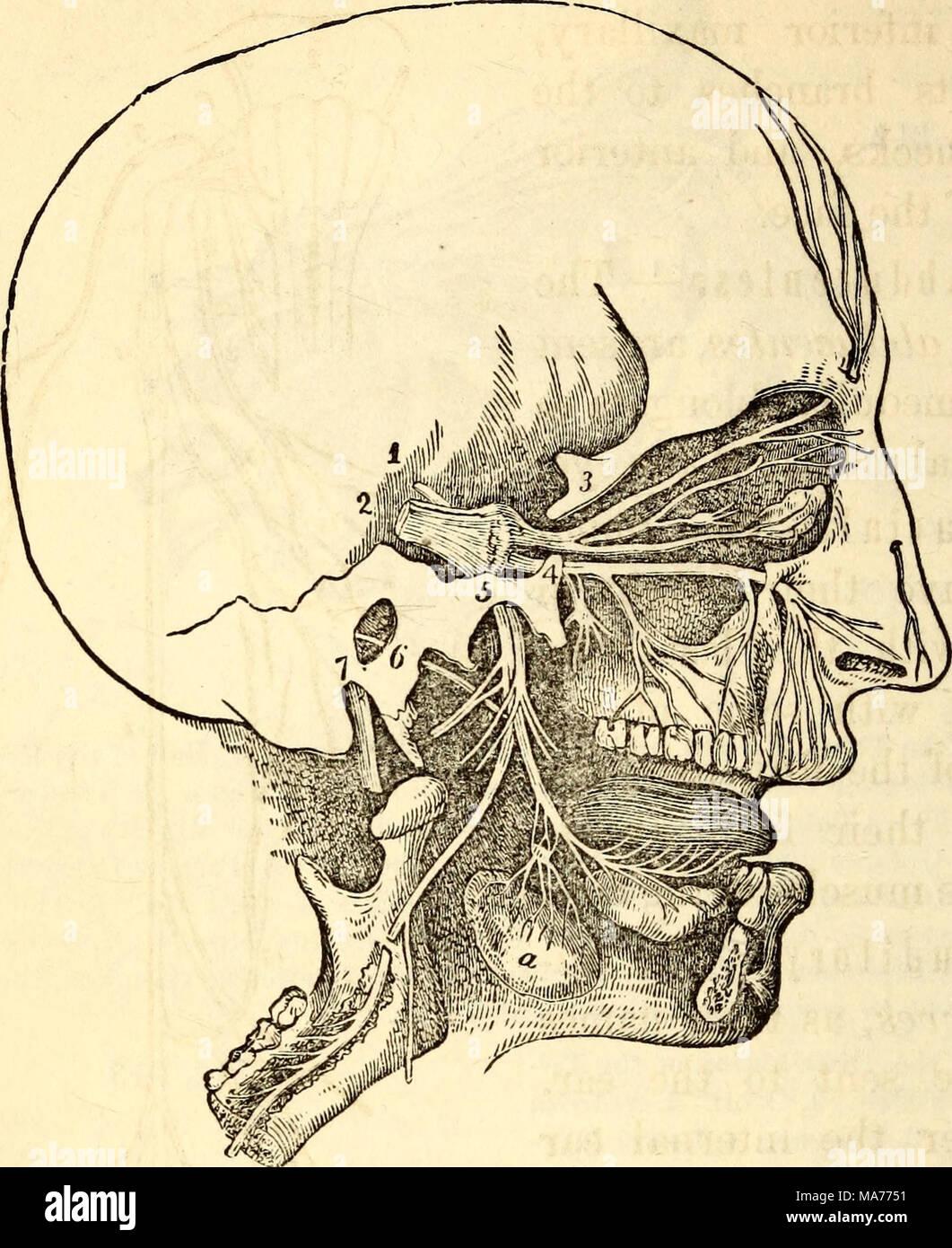 Wunderbar Anatomie Und Physiologie I Fotos - Menschliche Anatomie ...